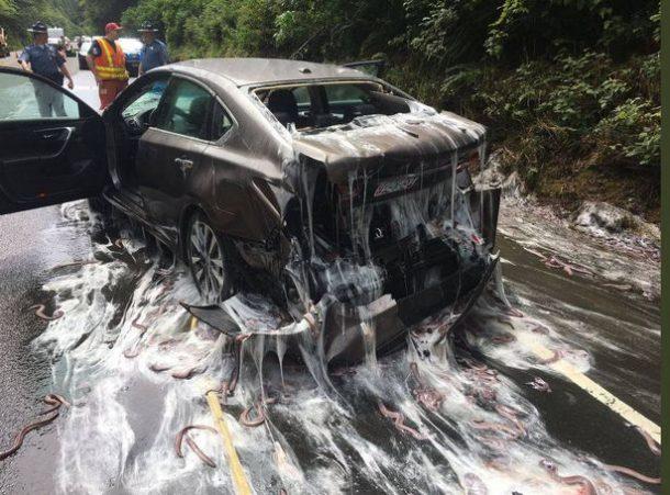 Plus de 3 tonnes d'anguilles déversées sur une autoroute — Etats-Unis