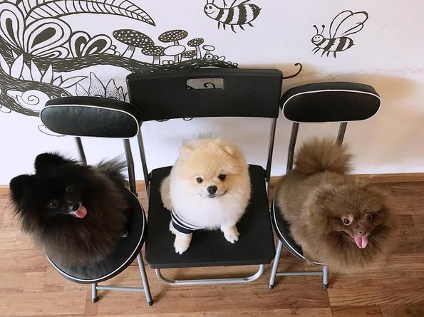 bar a chiens