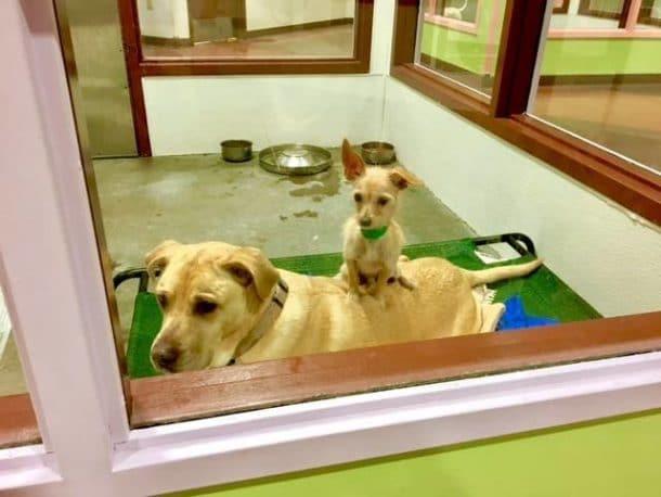 deux chiens inseparables