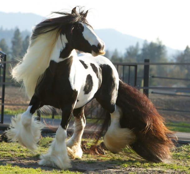 Avez vous d j vu un cheval moustache alors c est que - Cheval rigolo ...