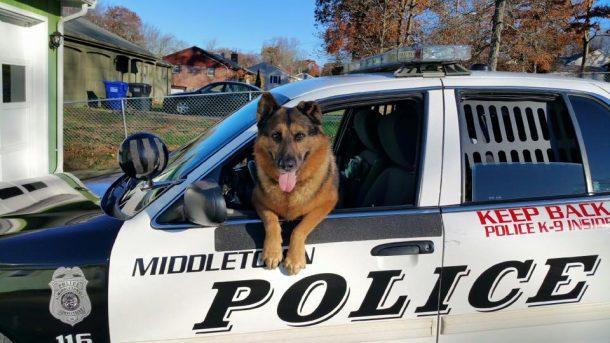 Hunter chien policier