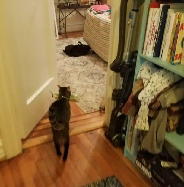 chat voleur de pailles