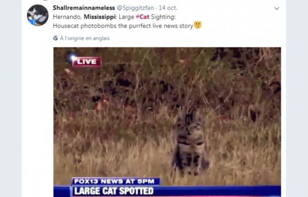 Ce reporter s attend filmer un puma mais il va avoir une sacr e surprise vid o - Herbe a chat seche ...