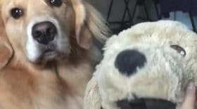 sadie chien triste