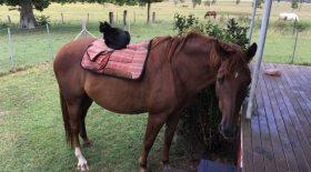 amitie chat et cheval