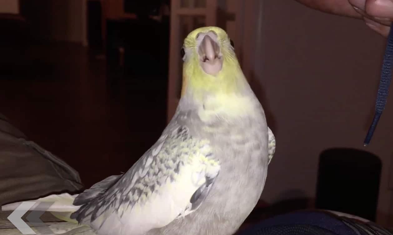 Un Oiseaux Chante