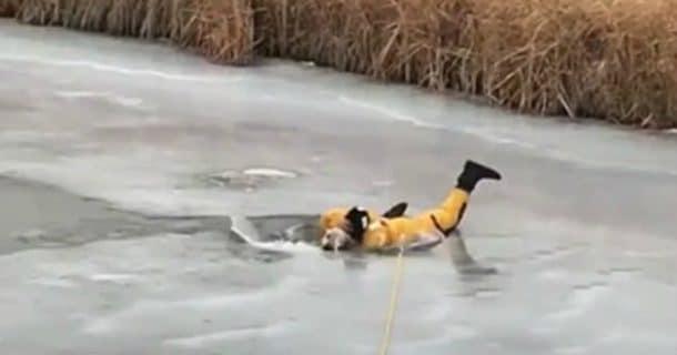 sauvetage chien lac gele