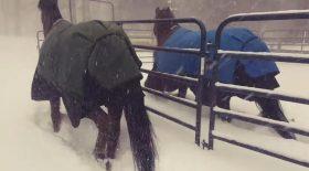 chevaux neige