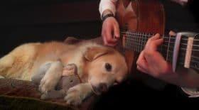 maple aime la musique