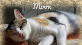 chat moon