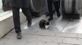 chat devant une bouche de métro