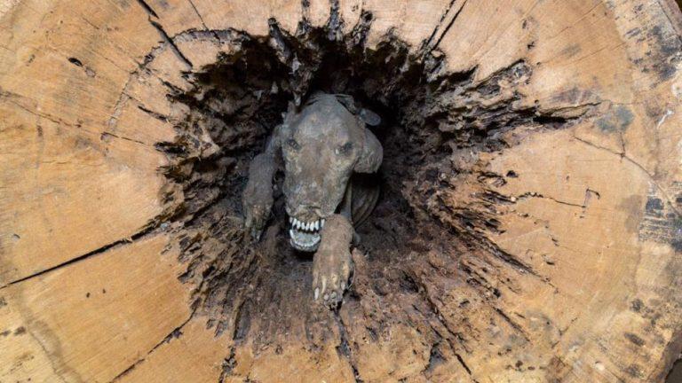 chien-momifie-768x432.jpg