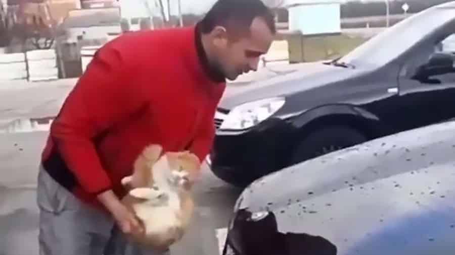 il trempe son chat dans un seau d 39 eau puis nettoie sa voiture en utilisant son animal comme un. Black Bedroom Furniture Sets. Home Design Ideas