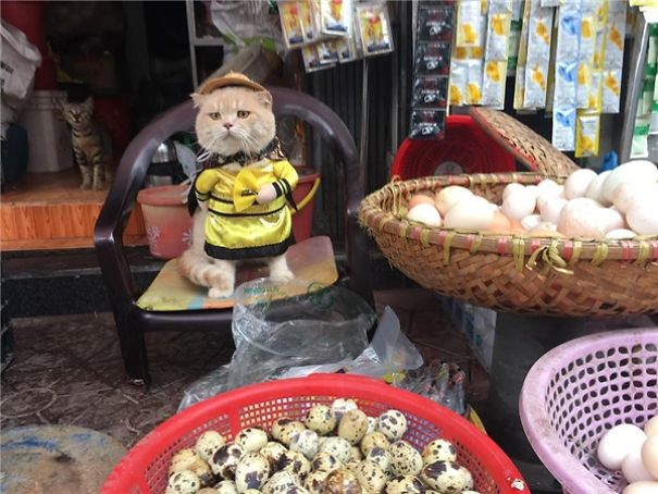 marché au poisson vietnam