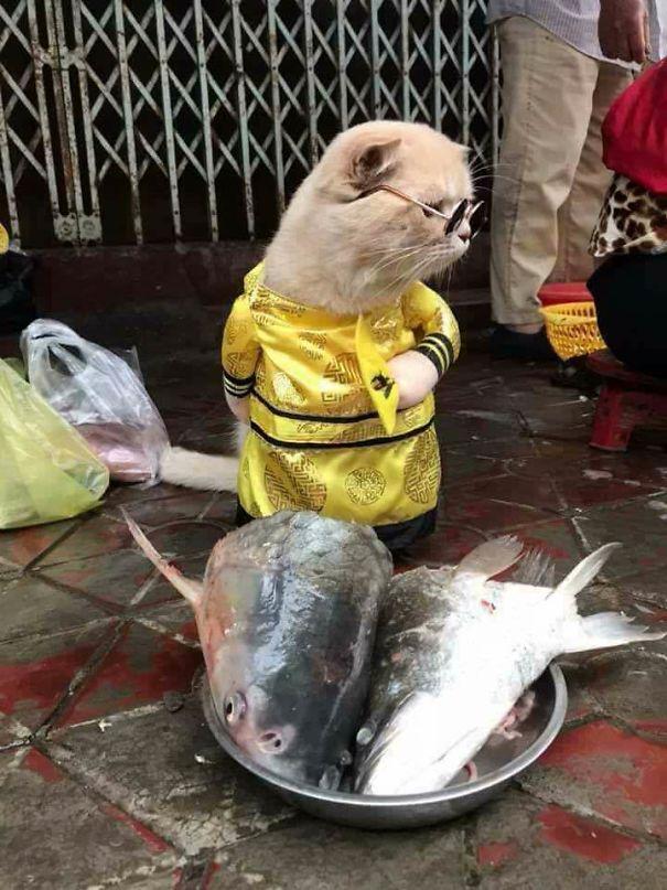 assistant poissonnier