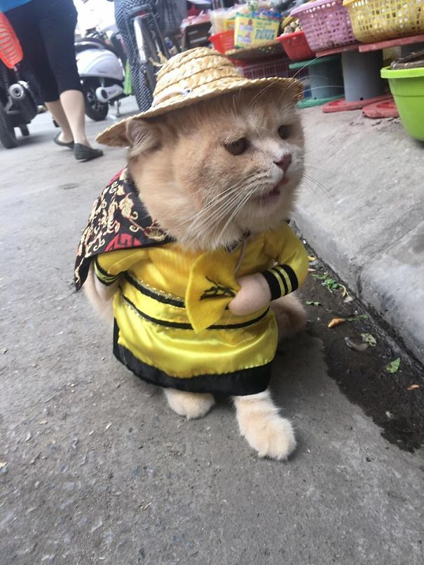 poissonnier vietnam