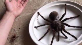 un araignée géante