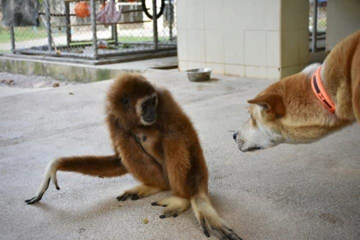 gibbon refuge WFFT