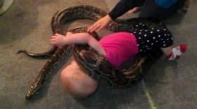 un bébé joue avec un serpent