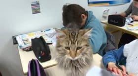 chats dans la classe