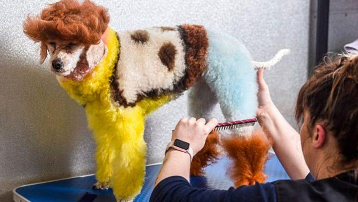 toilettage de son chien en woody de toy story