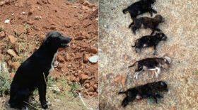 des chiot assassinés en Inde
