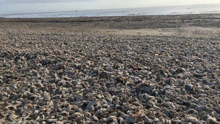étoiles de mer sont échouées sur une plage