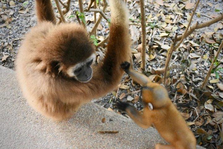 gibbon jub jib