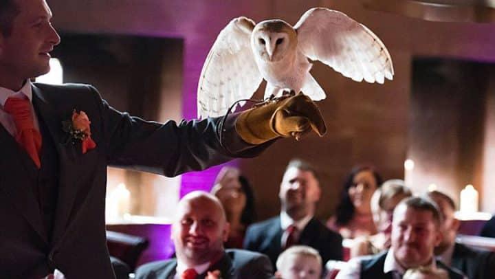 un hibou apporte les alliance lors d'un mariage