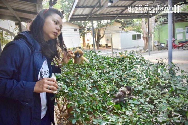 bébé macaque crabier