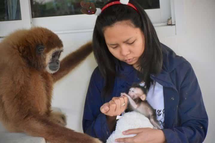 gibbon et bébé macaque