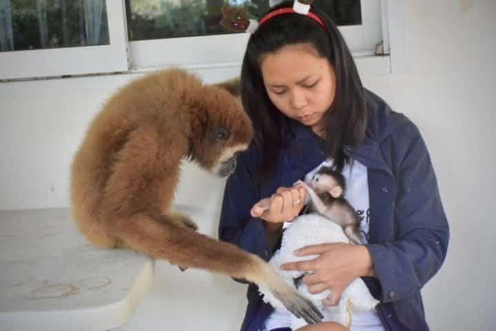 jub jib le gibbon et pearl le macaque crabier