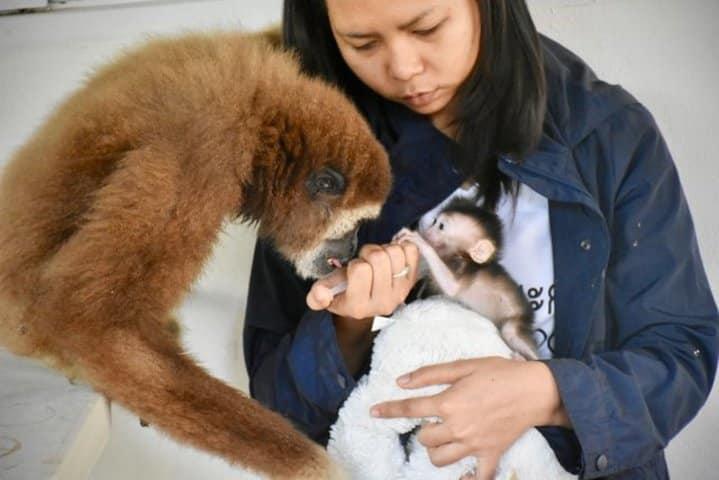 refuge animalier thailande singes