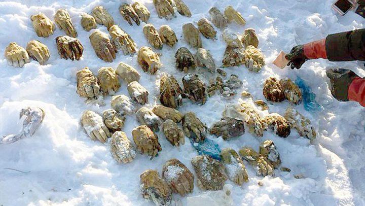 54 mains coupées retrouvées dans un sac
