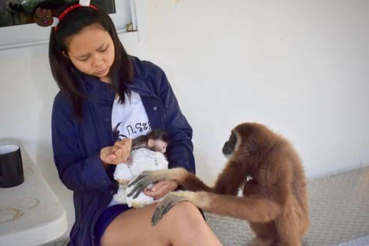 soigner un bébé macaque