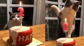 chat éteint une bougie d'anniversaire