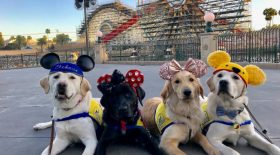 chiens guides disney