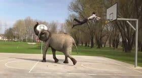 slam dunk panier basket éléphant dompté