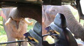 éléphant énervé s'attaque à une voiture