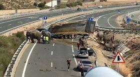 éléphant mort dans un accident de camion sur l'autoroute