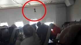 un oiseau a pris l'avion