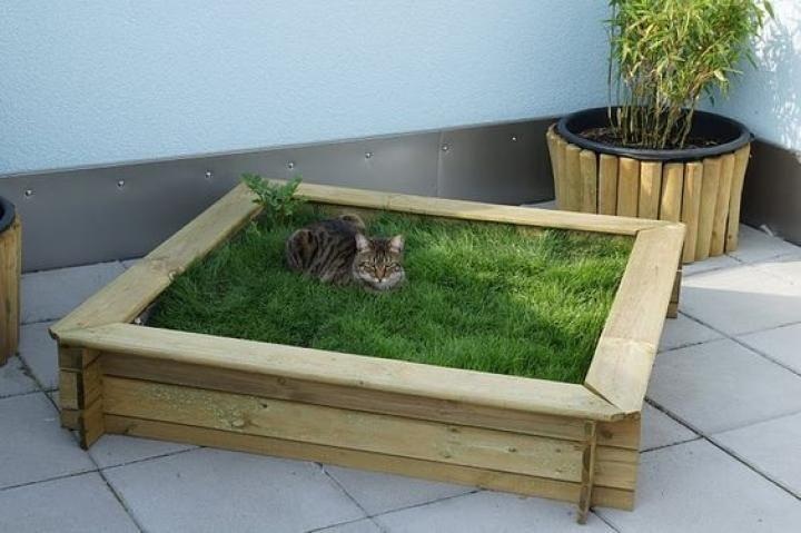 10 des arbres chat inspir s de la nature qui sublimeront for Acheter piscine pour chien