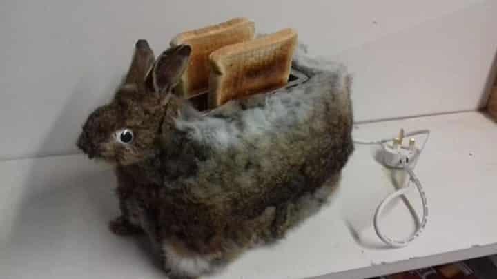 taxidermiste crée un grille-pain lapin