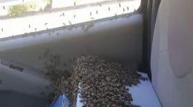 abeilles en liberté volent voiture prisonnieres