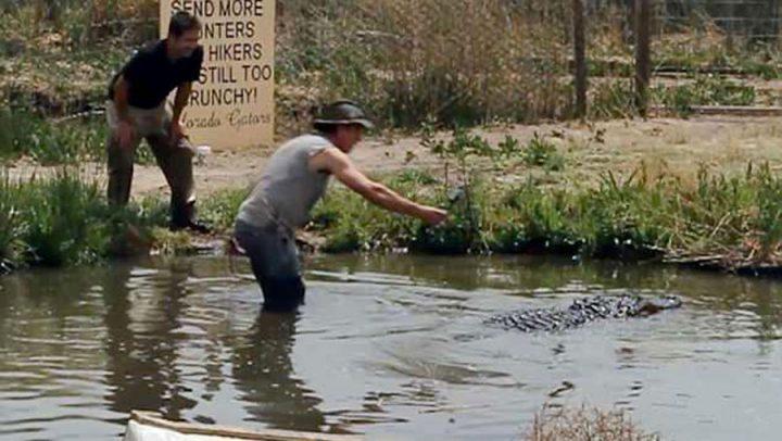 alligator perche à selfie arrache bras