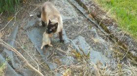 Un chat et un hibou se battent pour un lapin !