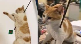 chat transpercé par une flèche