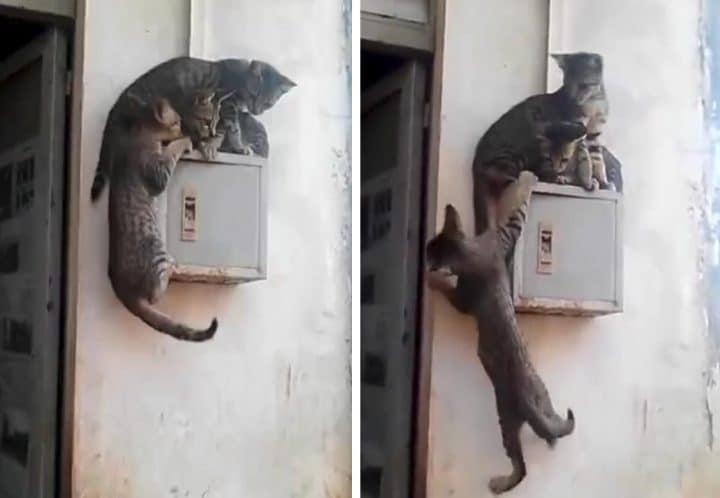chats cascade