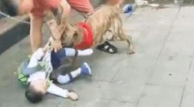 chien, attaque chien, enfant attaqué, enfant, Chine