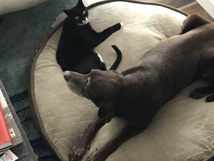 amitié entre chien et chat